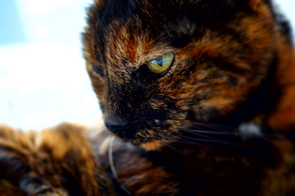 tortoiseshell-cat-elle-blonde-luxury-lifestyle-blog